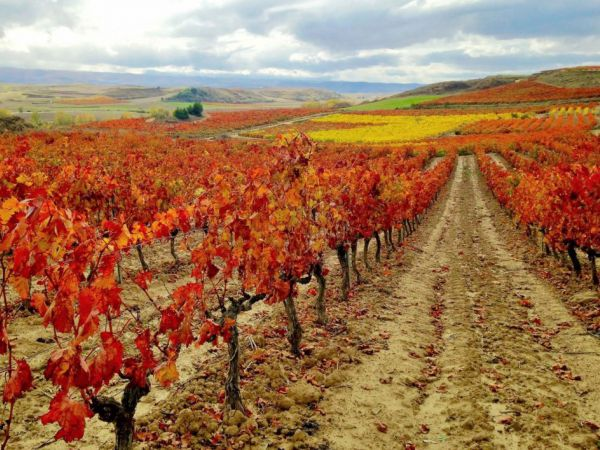 The Wine Route of northern Spain